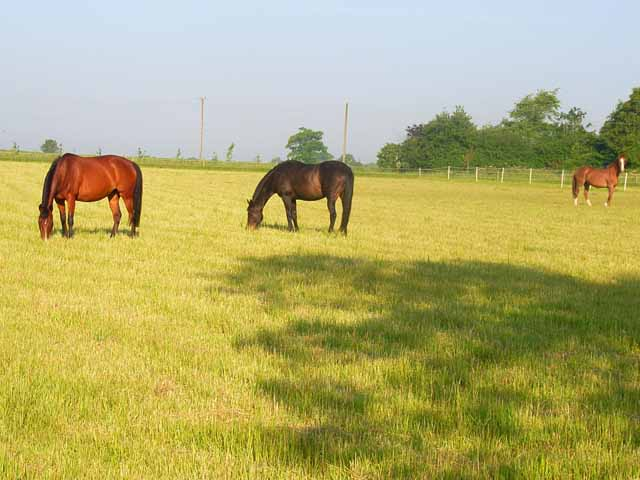 Horses at Washmere Green