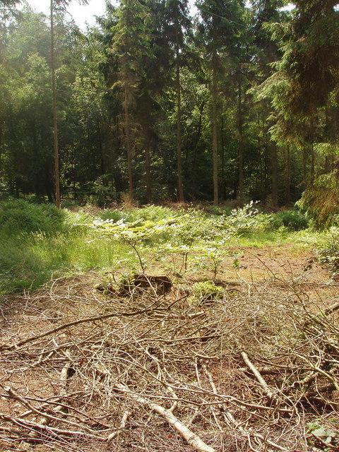 Monkton Wood, near Speen