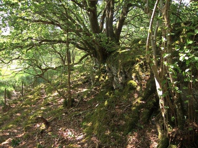 Woodland near Llandecwyn