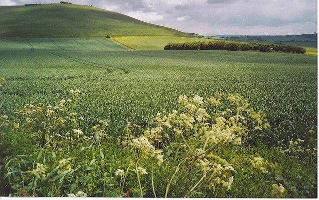 Downland West of Milk Hill.