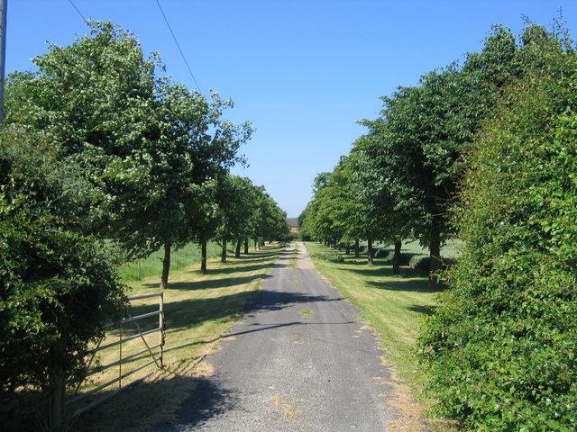 Driveway to Hardwick Farm