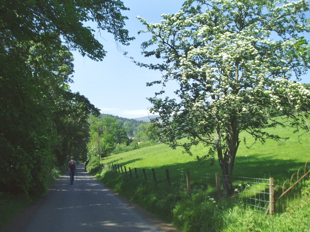 Country road near Traquair