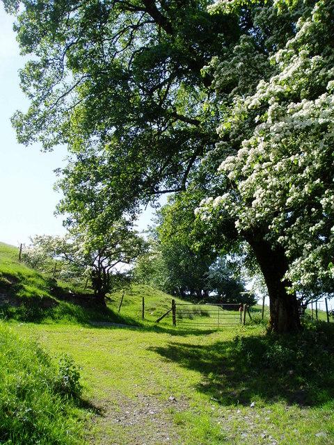 Farmland at Llechwedd Ystrad