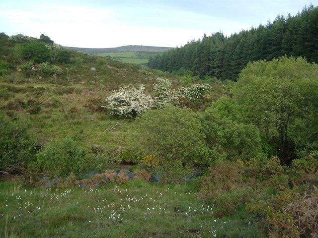 East Dart valley at Little Newtake Plantation