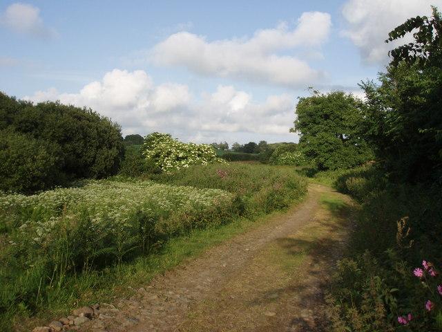 Lane to Trevarthian