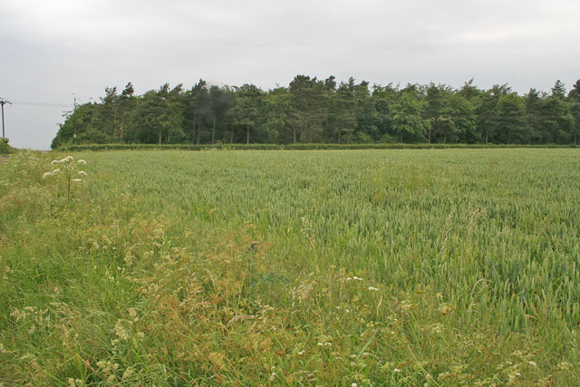 Farmland off Laming Gap Lane