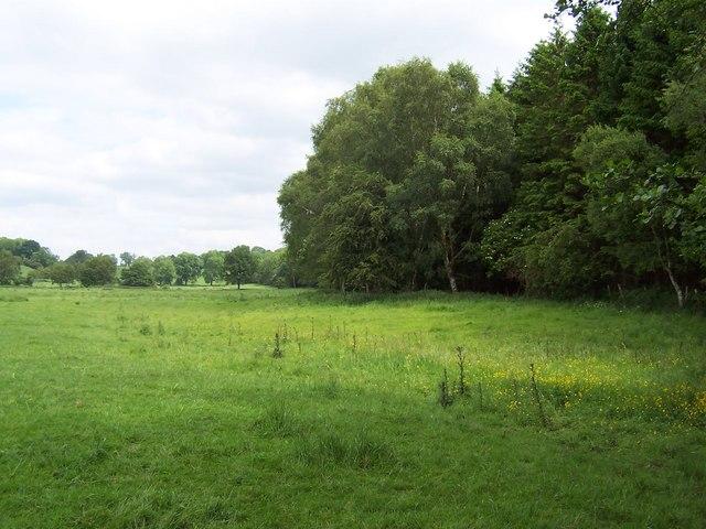 Western Edge of Hollin Head Wood