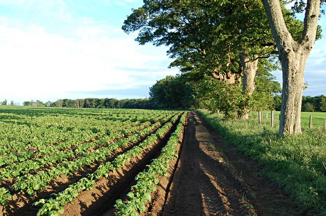 Field near Elie House