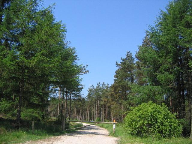 Cropton Forest Track