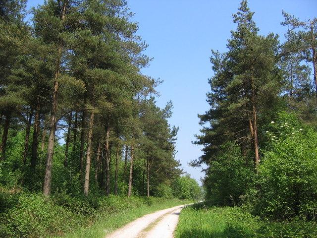 Forest, Stony Moor