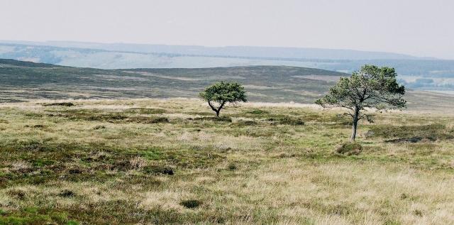 Moor above Birnie