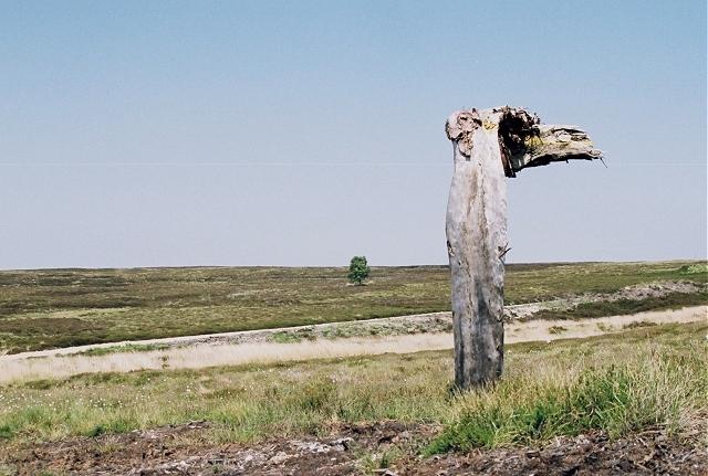 Moorland 'Nessie'