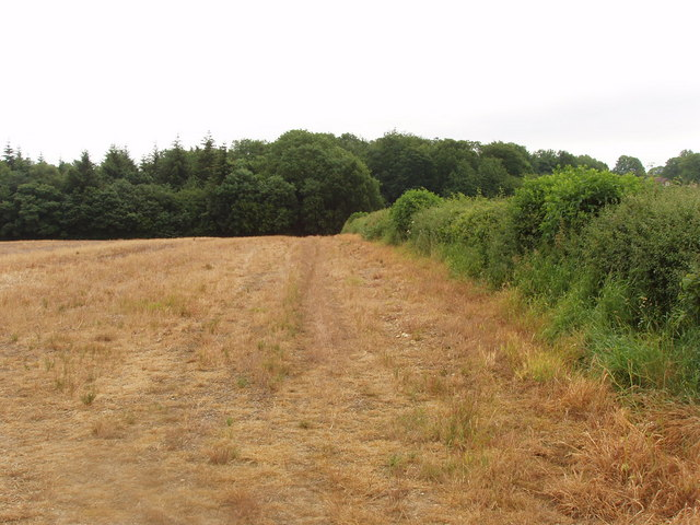 Stubble field and Chesham Bois Wood