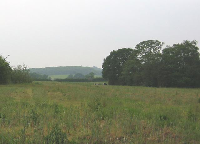 Hewitt's Moss