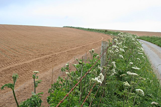 Planted Field, Fence and Road