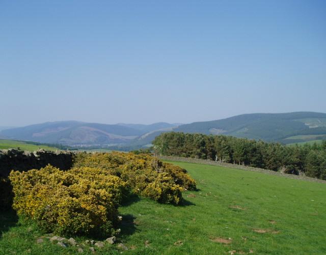 Field, Newhall Farm
