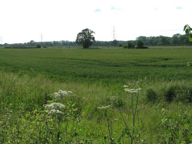 Farmland near Rowde