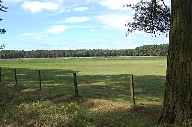 Kinshaldy Farmland