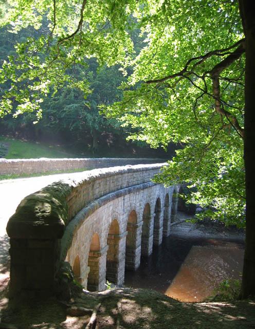 Beeches by Hollin Clough bridge