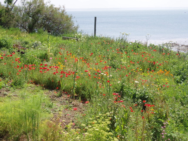 Cottage garden, Prussia Cove