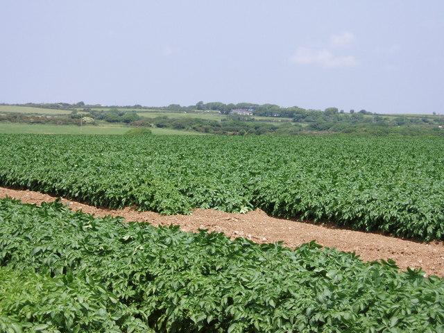 Potato fields near Townshend