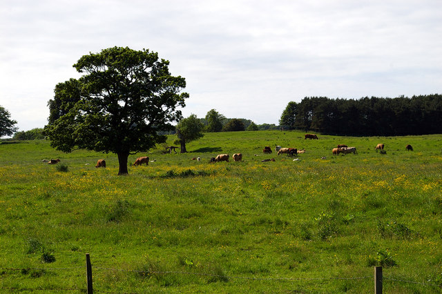 Site of Deserted Medieval Village