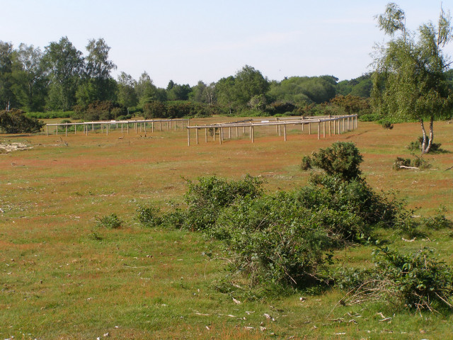 Gorley Common, New Forest