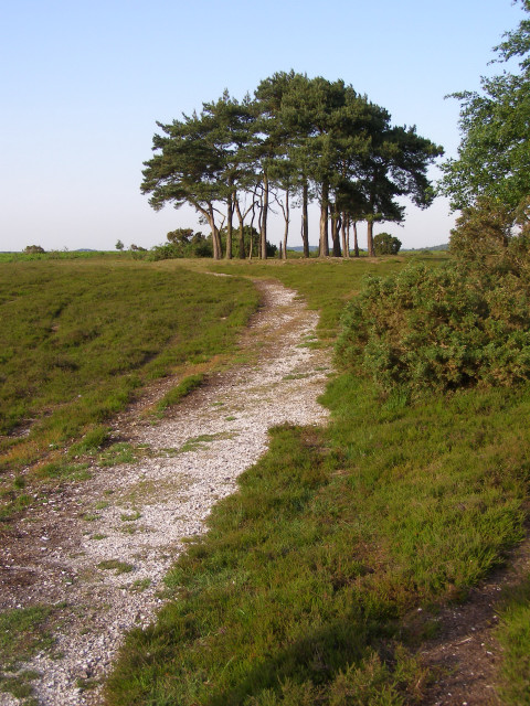 Approaching Robin Hood's Clump, Ibsley Common, New Forest