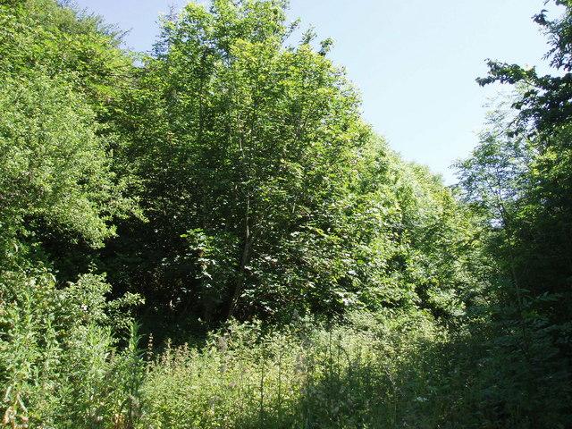 Roskymmer Wood