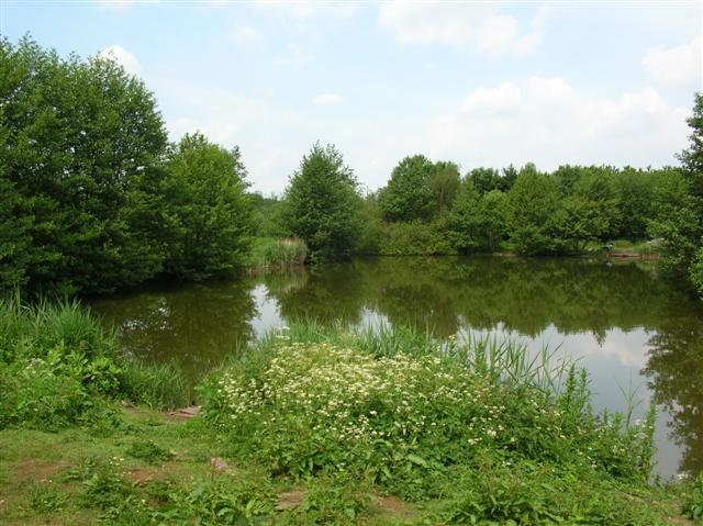 Thorpe Wood