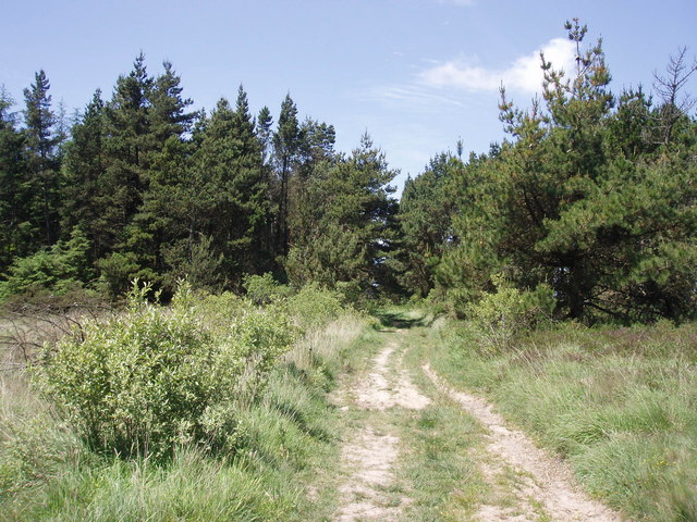 Croft Pascoe Forest