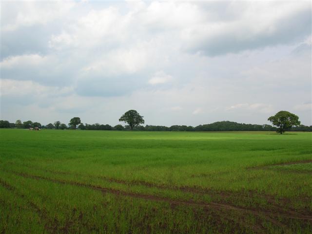Aldwark Moor