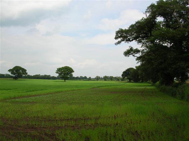Fields at Aldwark Moor