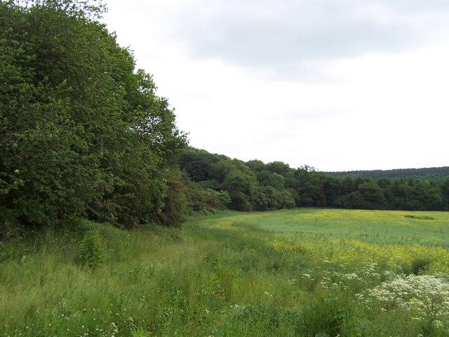 Eight Acre Wood