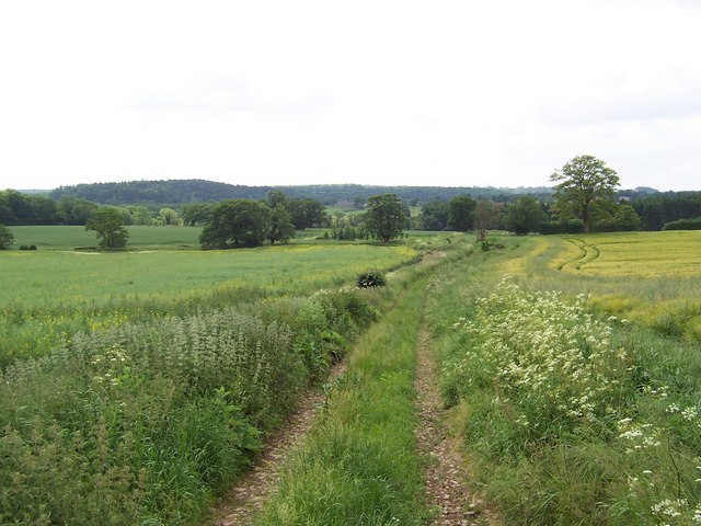 Track near Eight Acre Wood