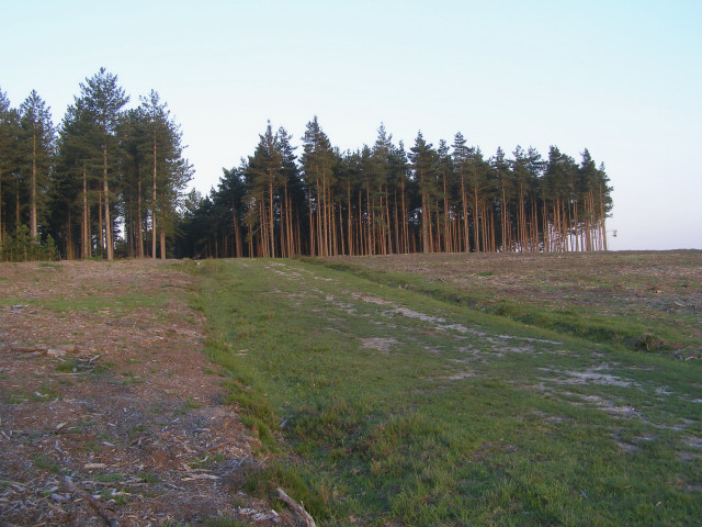 Cleared area in the Longdown Inclosure, New Forest