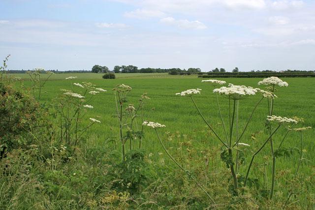 Farmland off Heath Lane, near Scothern, Lincolnshire