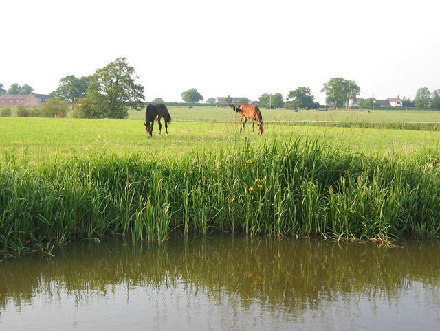 Horses grazing by Shropshire Union canal