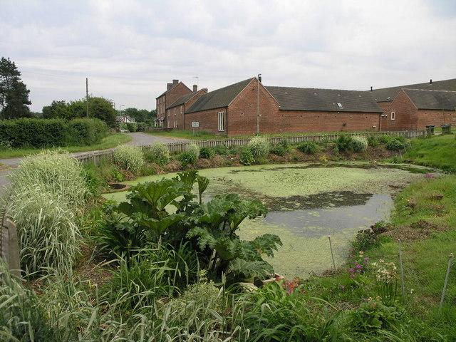 Farm Town Pond
