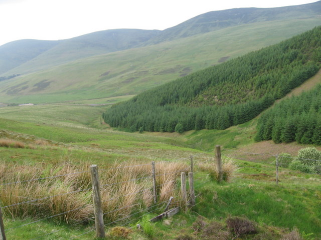Earns Gill and Great Hill forest