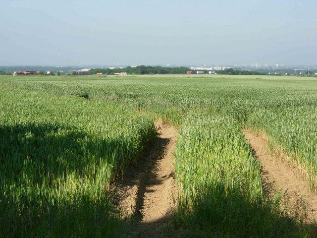 Farmland near Mobbs Wood