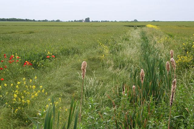 Farmland near Scothern, Lincolnshire