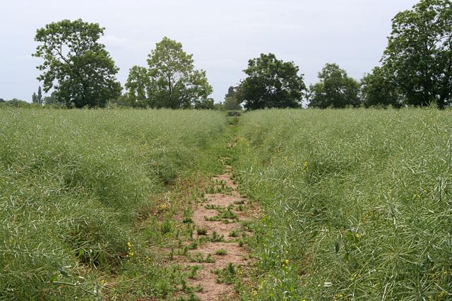 Public Footpath near Scothern, Lincolnshire