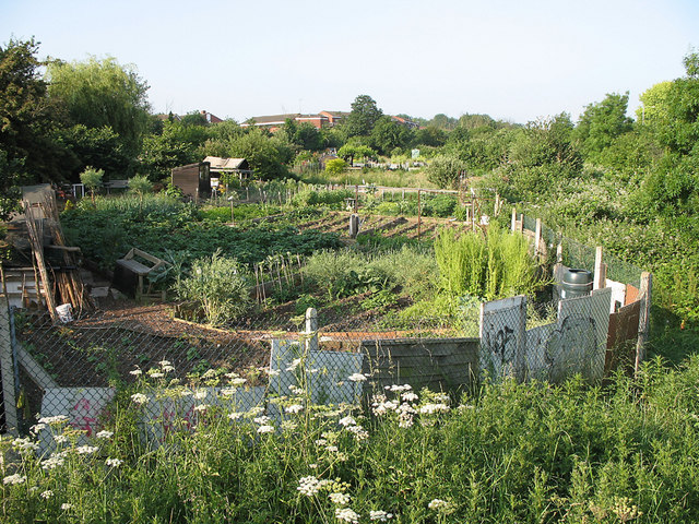 Vale Farm Allotments