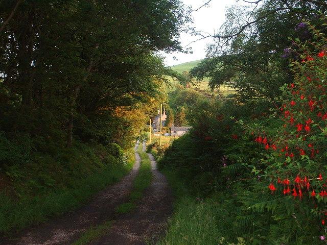 Lane to Cors-yr-hafod