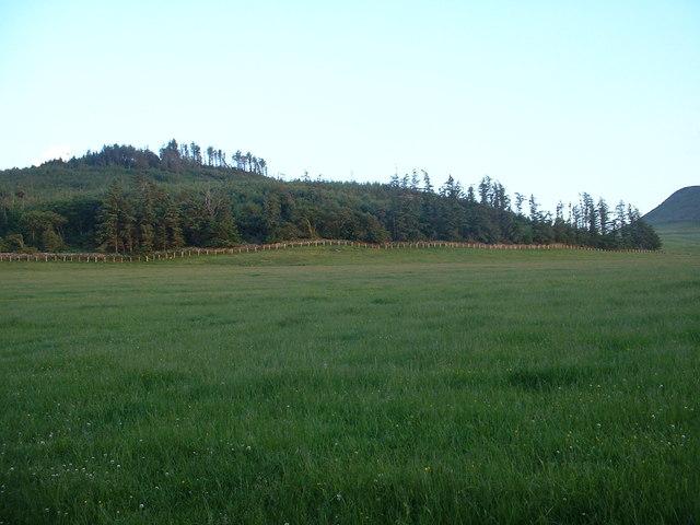 Woodland on Foel Ddu