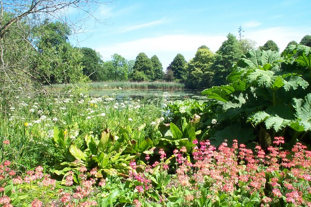 Bog Garden and the Great Pond, Forde Abbey Gardens