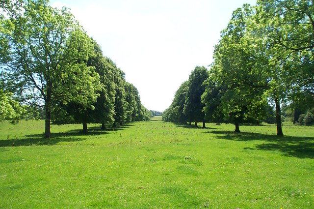Avenue of Trees, Forde Abbey Gardens