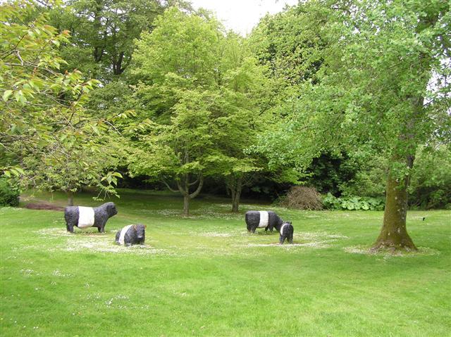 Cows at Threave