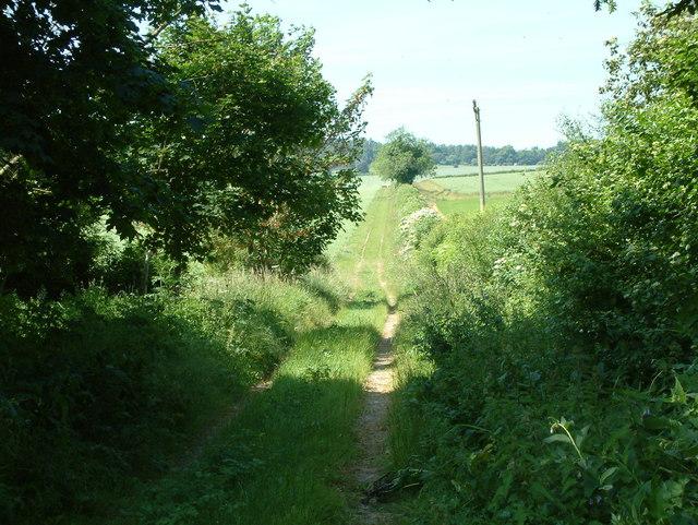 Farm Track, North of Rockbourne